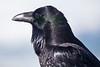 Raven9704