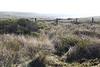 F Ranch near Bull Point Trailhead looking towards Drake's Estero