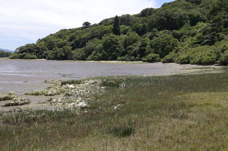 South end Tomales Bay