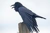 Raven7205