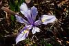 Iris3407