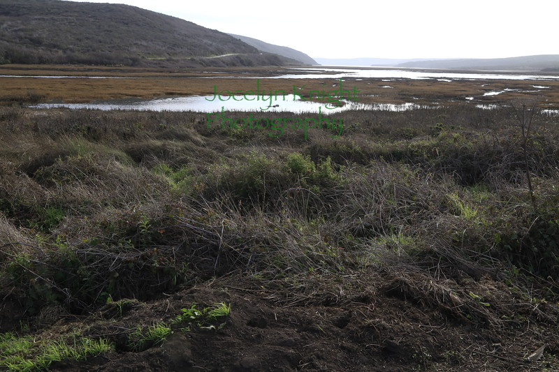 North end of Schooner Bay, looking south, which leads into Drakes Estero on Jan 15, 2021.