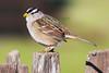 Sparrow6217
