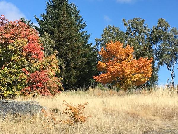 Autumn is on the way!