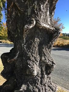 Birch trunk close-up