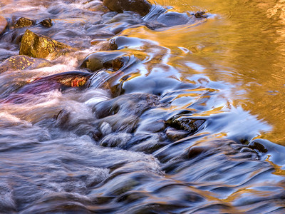 Coho Salmon, Solduc River, Olympic National Park
