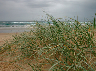 Lennox Head - grasses