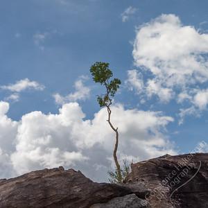 Kakadu National Park, Nawurlandja Lookout Walk - tree