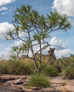 Kakadu National Park - tree