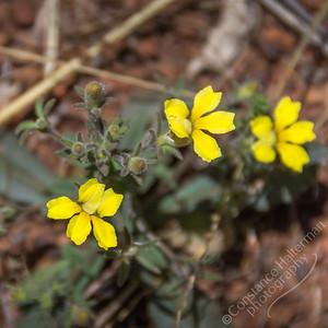 Kakadu National Park, Bukbukluk walk - wildflowers