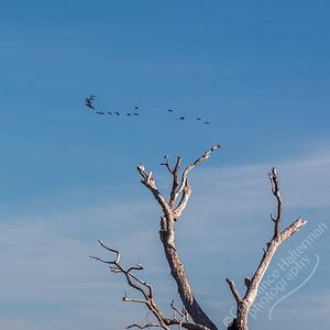 Kakadu National Park, Yellow Water Billabong - birds
