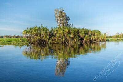 Kakadu National Park, Yellow Water Billabong - trees