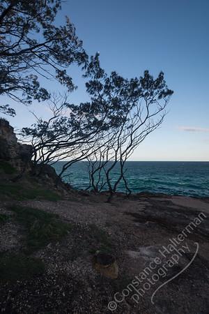 North Stradbroke Island - tree