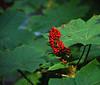 Creekside Berries