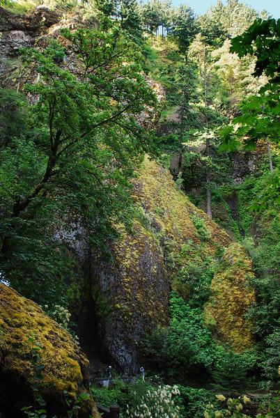 Wakeena Creek Trail