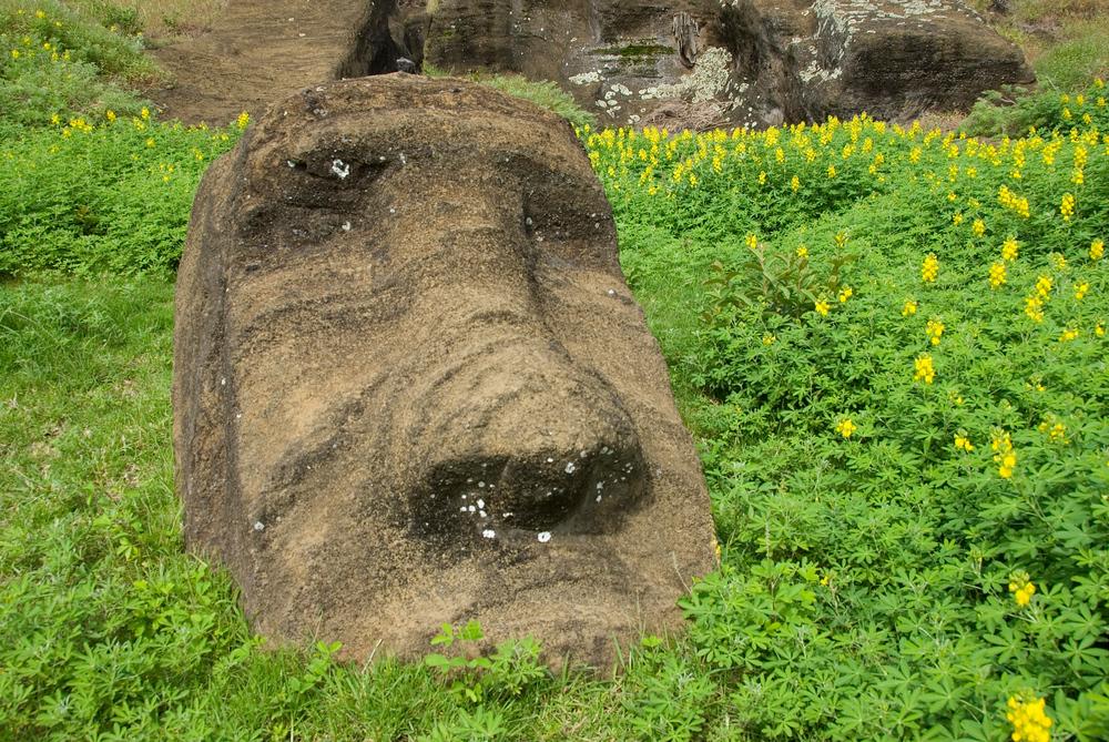 Maoi in plants, Easter Island, Rapa Nui
