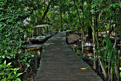 Walkway in Margrove forest, Korsae Village Resort