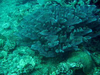 Coral reef while diving in Fiji