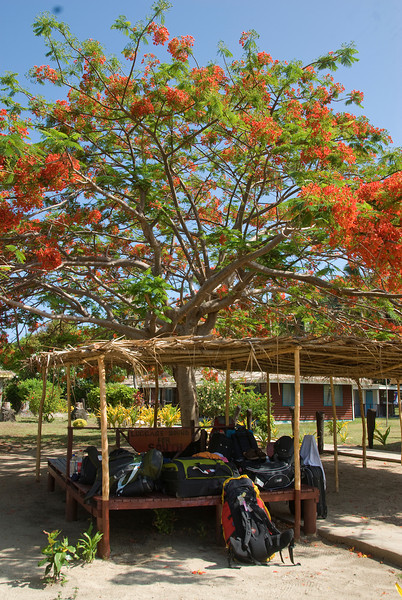 A tree in Yasawa Islands, Fiji