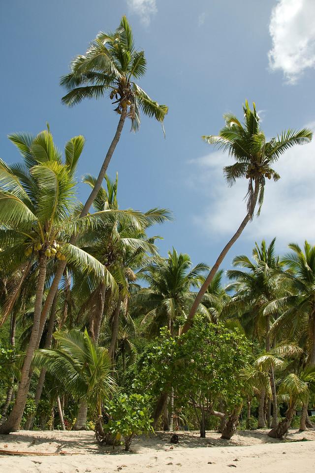 Palm trees in Yasawa Islands, Fiji