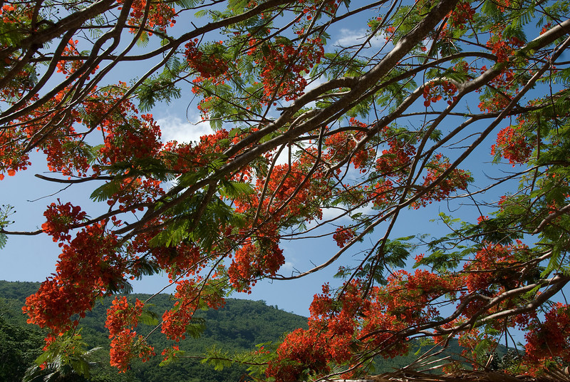 A tree in Yasawa Islands, Fiji