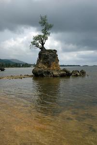 Tree - Guam