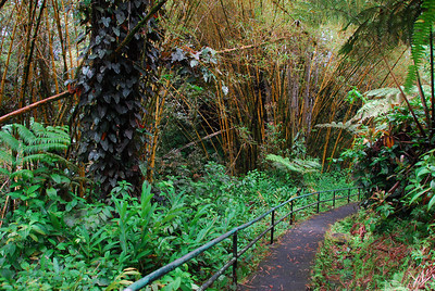 Hiking trail in Akaka Falls, Hawaii
