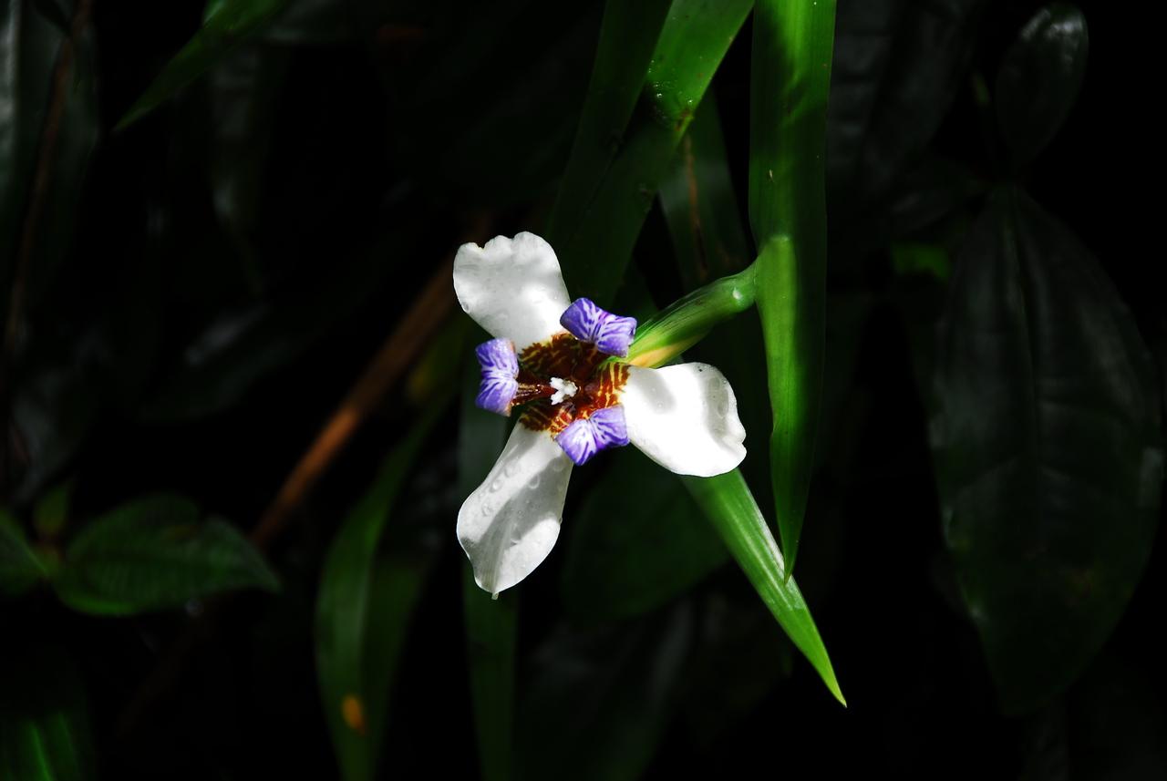 Flowering plant in Akaka Falls State Park, Hawaii