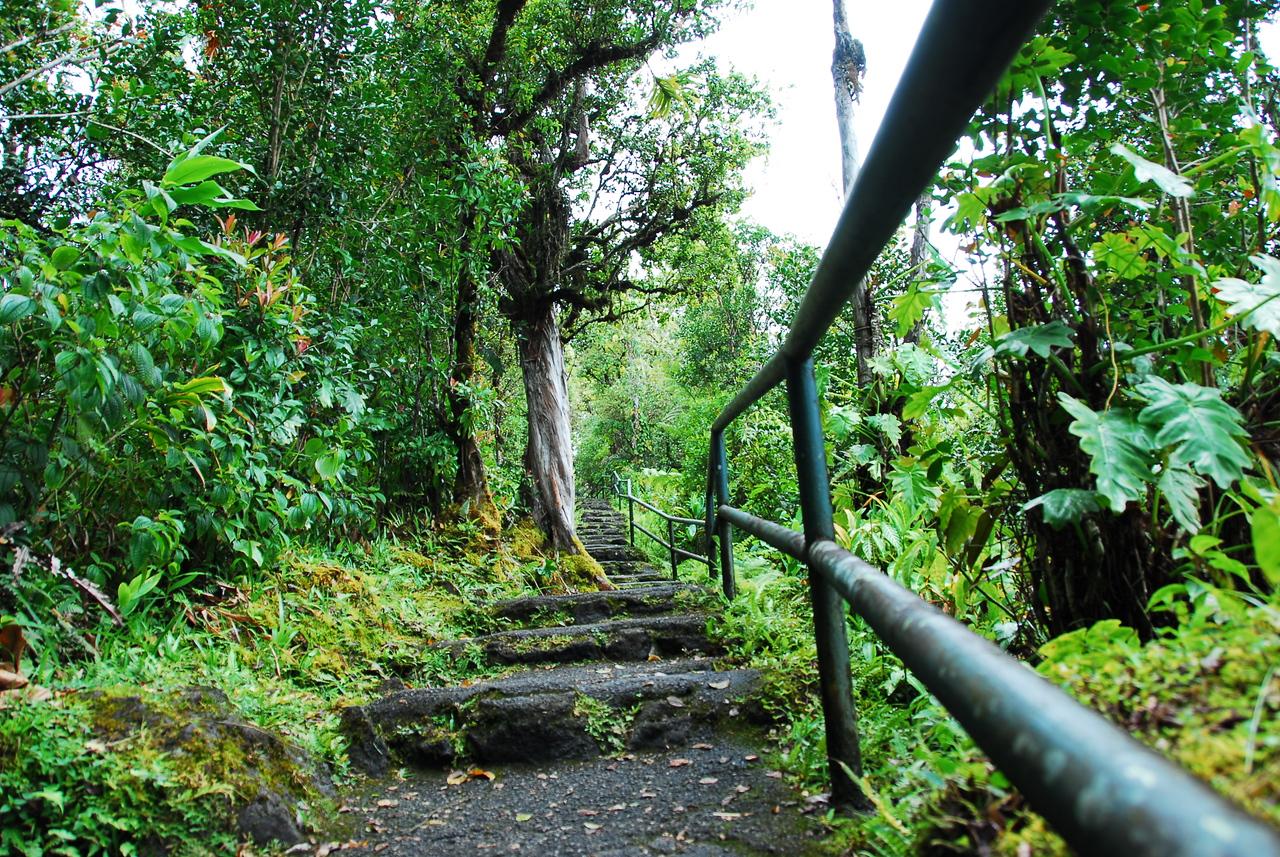 Hiking trail in Akaka Falls State Park, Hawaii