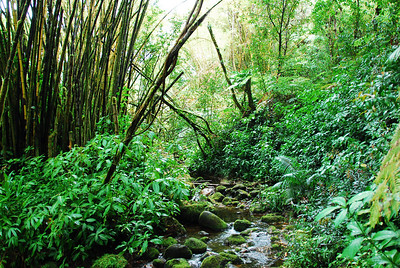 Stream in Akaka Falls State Park, Hawaii