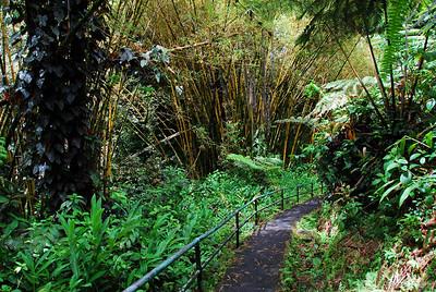 Hiking trail in Akaka Falls, Hawaii