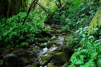 Stream in Akaka Falls, Hawaii
