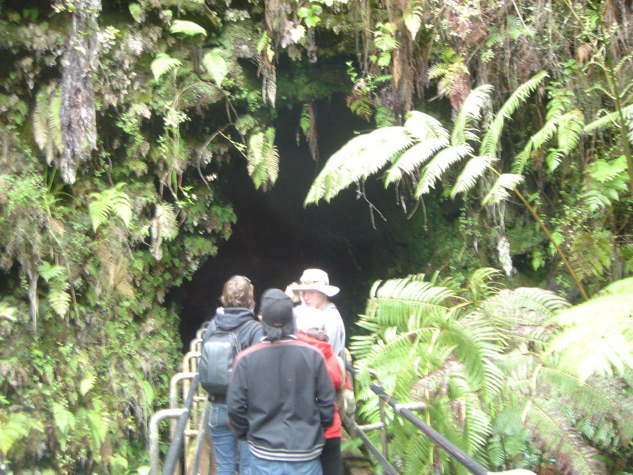Hiking through rainforest in Hawaii