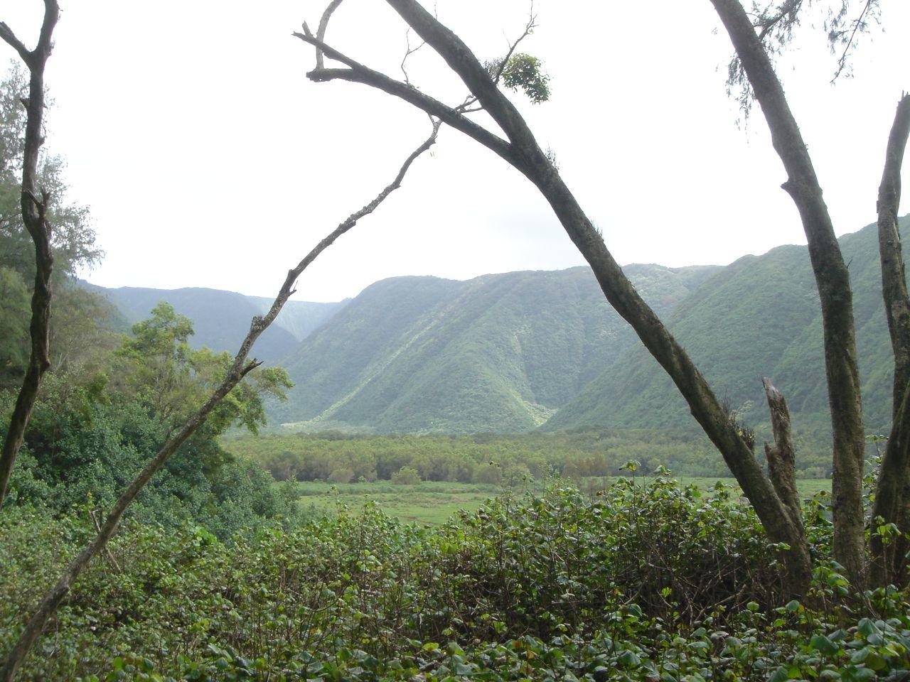 Landscape in Hawaii