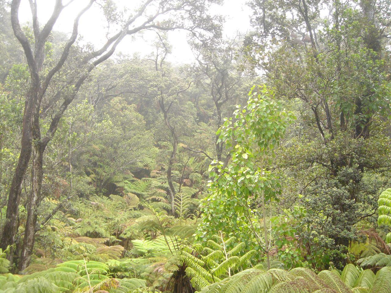 Rainforest in Hawaii