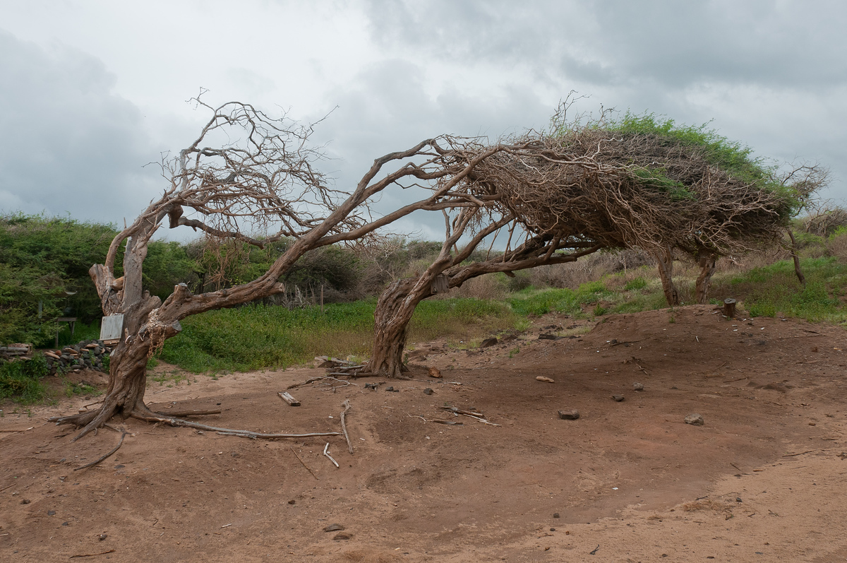 In some of the more exposed parts of the island, the winds are strong enough to make the trees grow sideways.