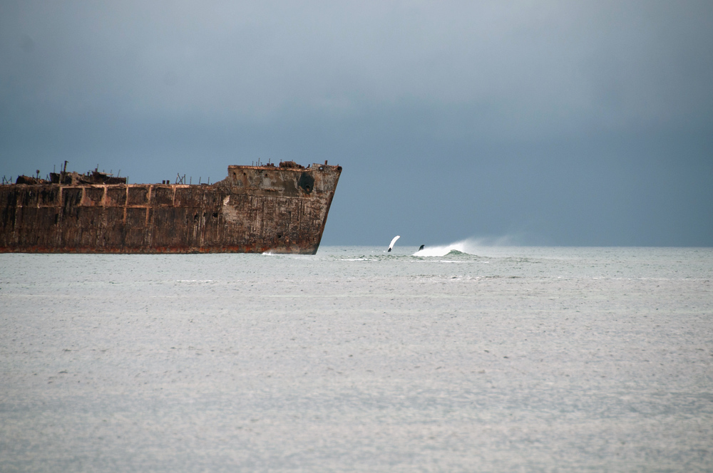 Whale Watching on Shipwreck Beach, Lanai
