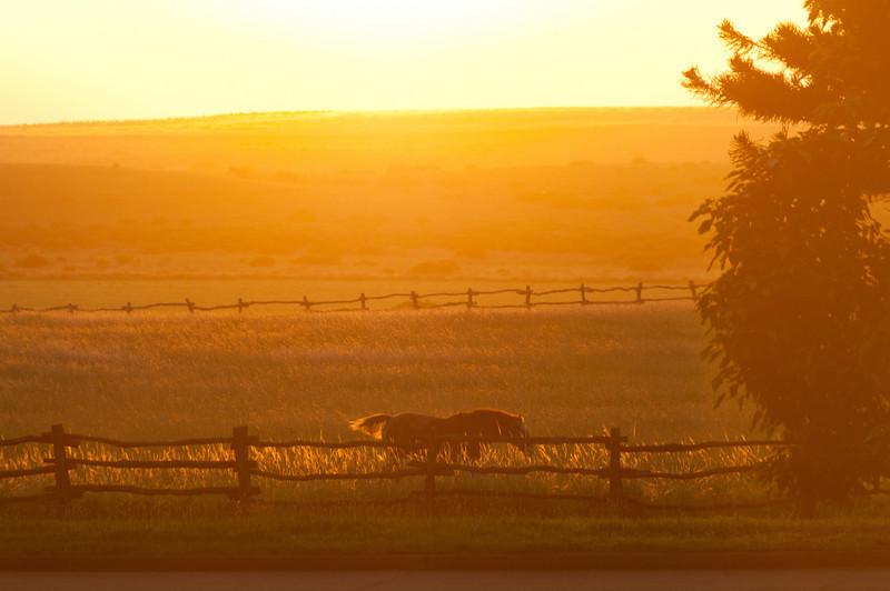 Horse on the field - Lanai, Hawaii