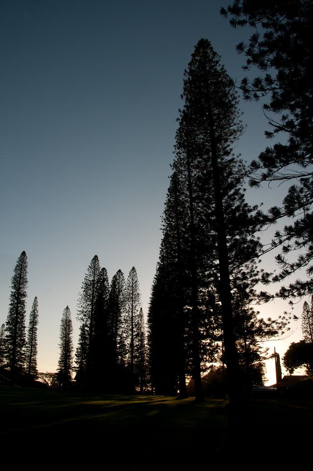 Silhouette of pine trees during sunset - Lanai, Hawaii