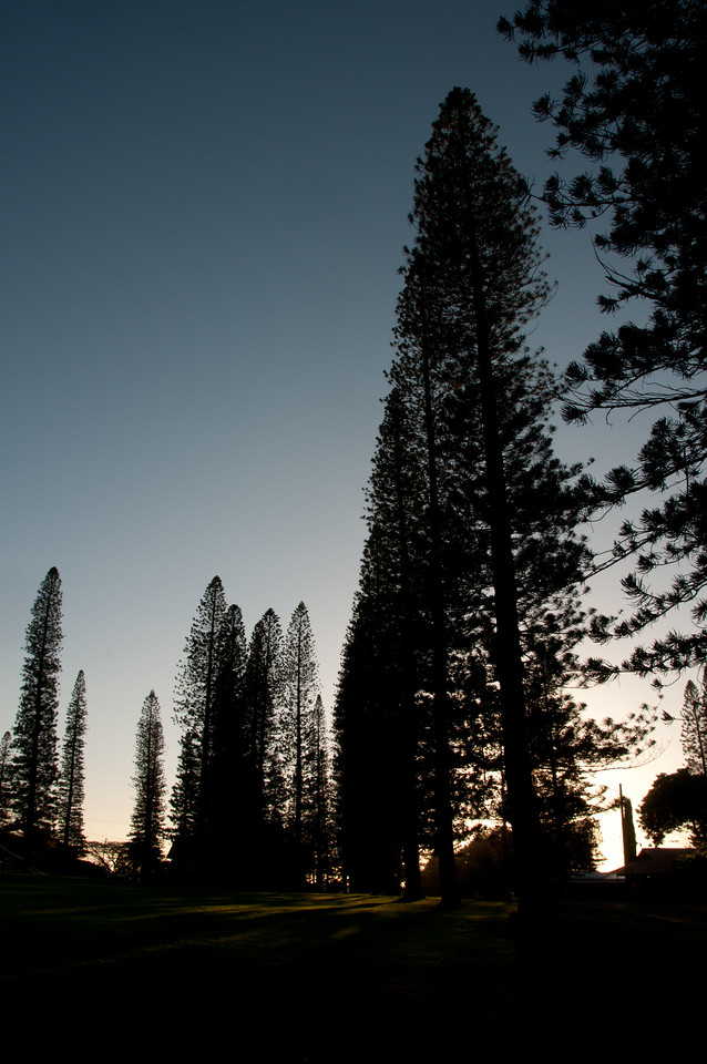 Silhouette of pine trees during sunset - Lanai, Hawaii
