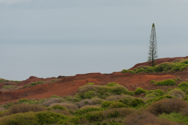Red sand landscape in Lanai, Hawaii