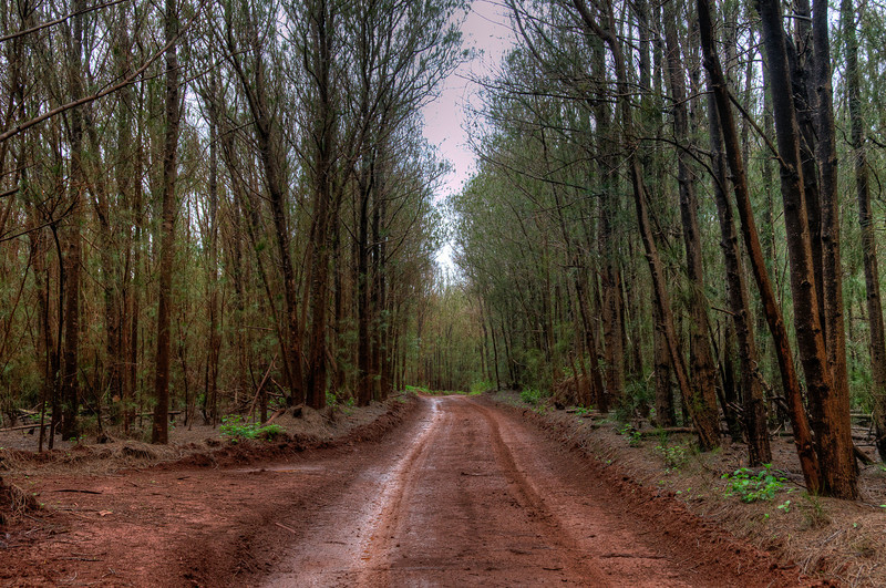 Tree-lined road in Lanai, Hawaii