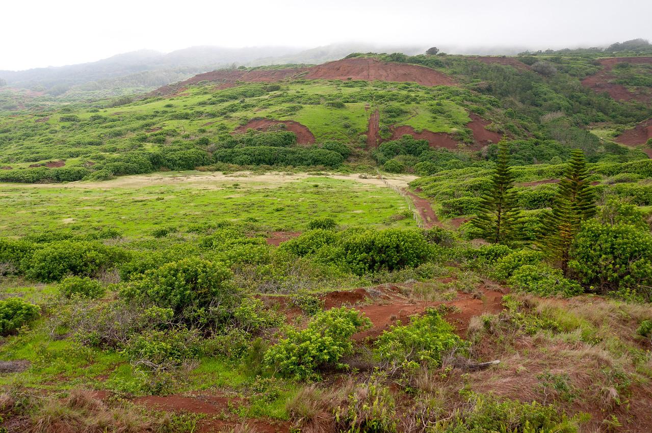 Landscape in Lanai, Hawaii