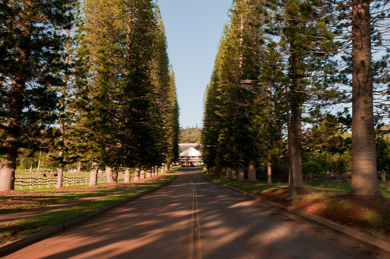 Tree-lined road in Lanai, Hawaii