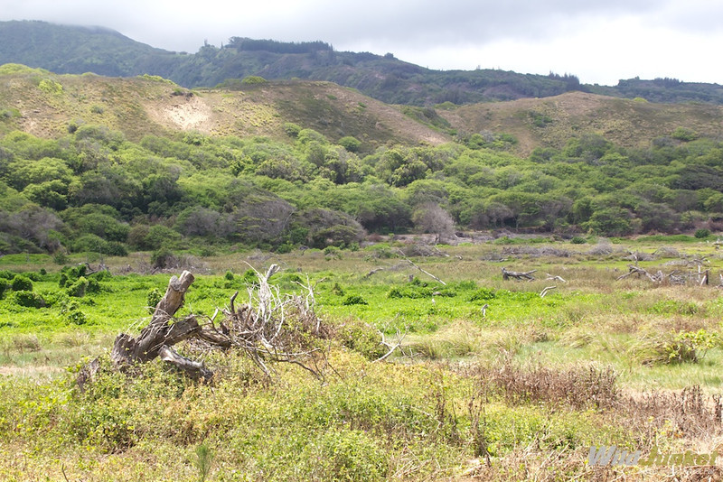Waihe'e Wetlands Refuge