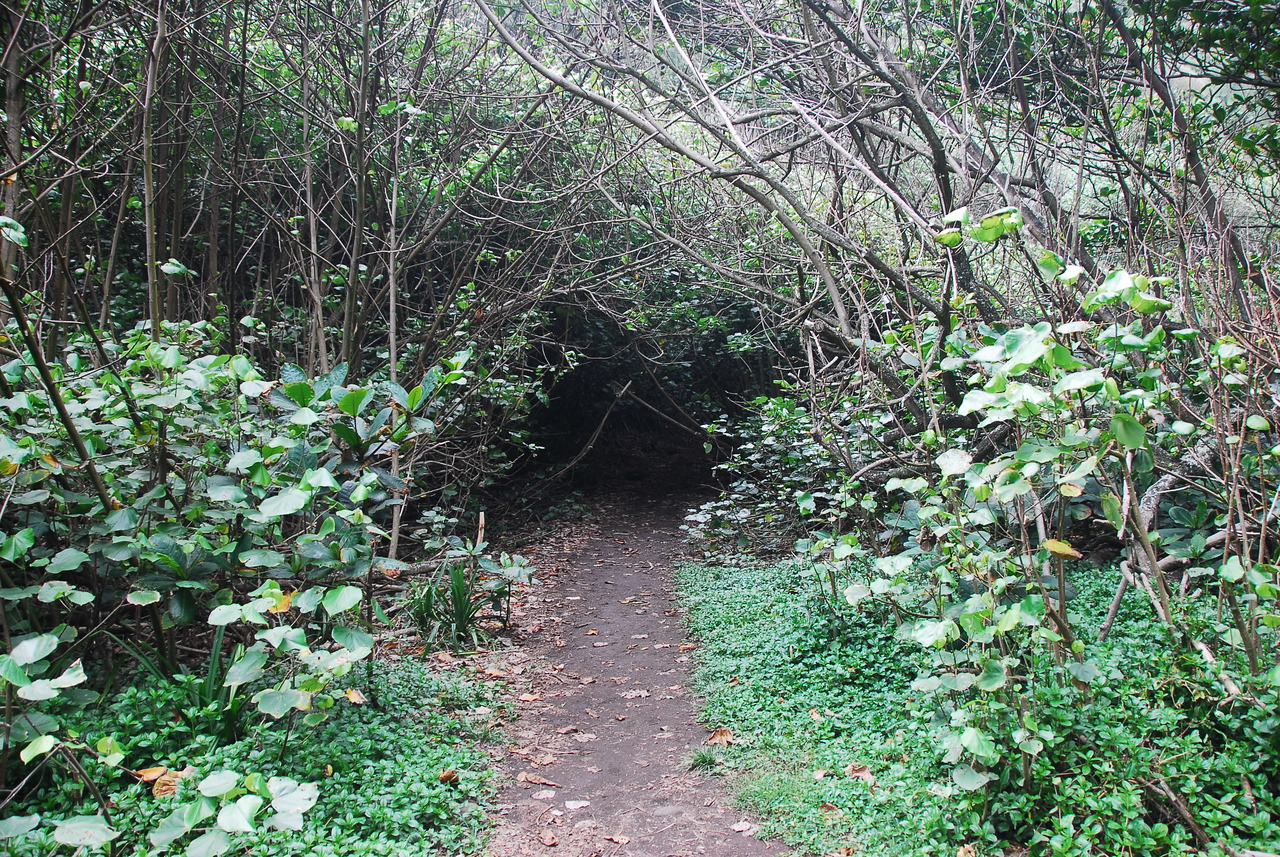 Hiking trail in Pololu Valley, Hawaii