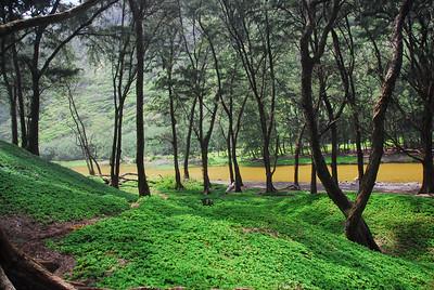 Stream in Pololu Valley, Hawaii