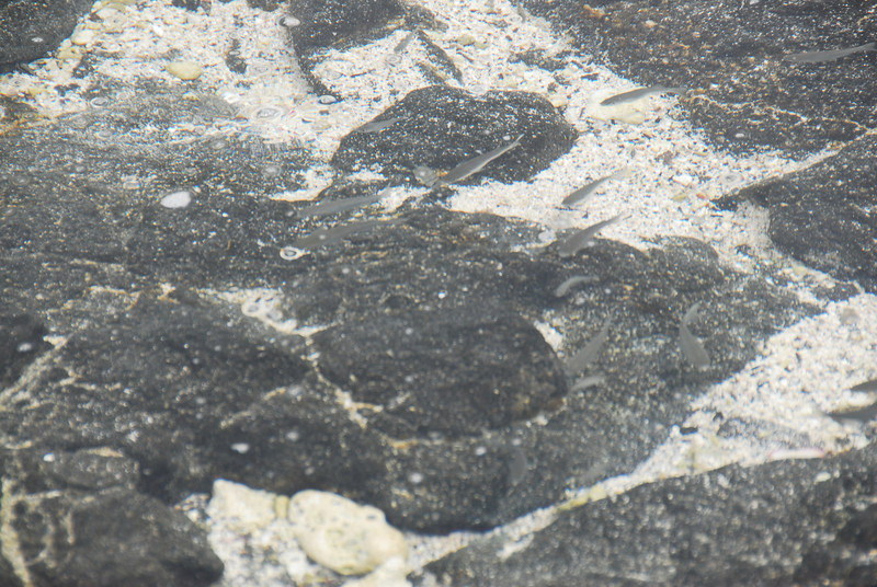 Small fish in Puʻukoholā Heiau National Historic Site, Hawaii