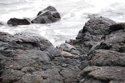 Rocky beach at Puʻukoholā Heiau National Historic Site, Hawaii
