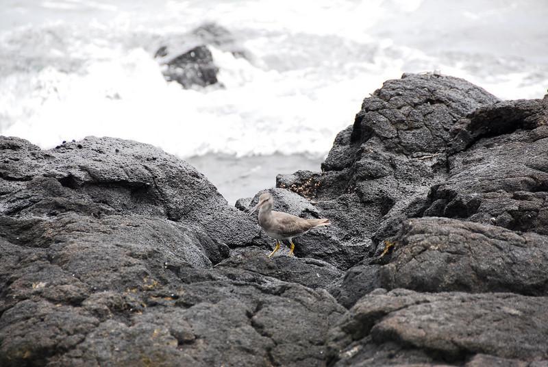 Rocks along the coast in Puʻukoholā Heiau National Historic Site, Hawaii